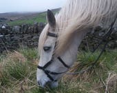 Black COB Biothane Micklem style bridle bitless sidepull size COB with reins