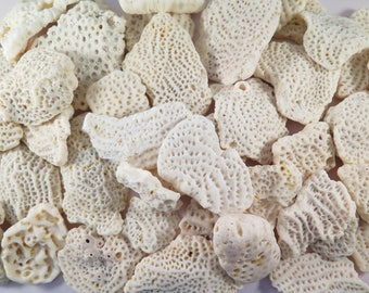 Natural beach coral,  2.5 pounds of white coral,  Bulk Coral  #118C