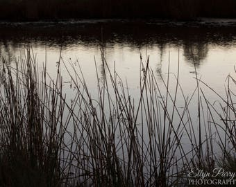 Reed by the Water // Photography // Print // Art