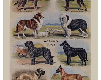 Five vintage dog prints, printable digital downloads,  no.  182