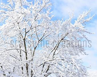 Snow Photograph, Snowy Tree, Blue Skies, Winter Photography, 8x10, 5x7