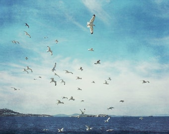 "Beach ocean photography print, seagulls flying aqua indigo blue Greece nautical wall art ""Taking Flight"""