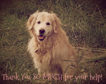 Pure Gold- Golden Retriever, Instant Download, Thank you for your help!