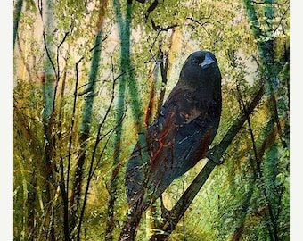ON SALE 35% Giclee Archival Print, Photomontage, Collage, Painted Photographs, The Return of the Nightingale