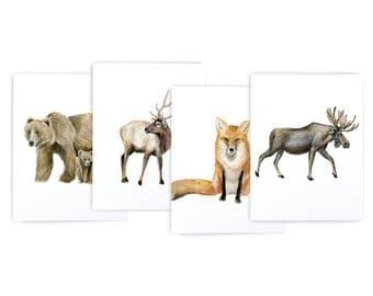 Mountain Animal Variety Set