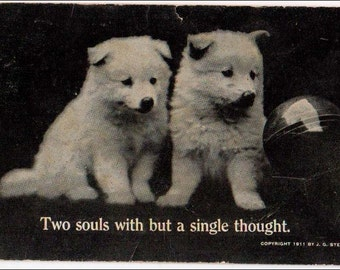 Puppies postcard, Two souls with but a single thought Puppies vintage postcard, dog carte postale, dogs postcard, RPPC, real photo postcard