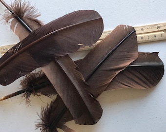 TURKEY QUILL, Dark Chocolate Brown , 4 pieces / Q-13