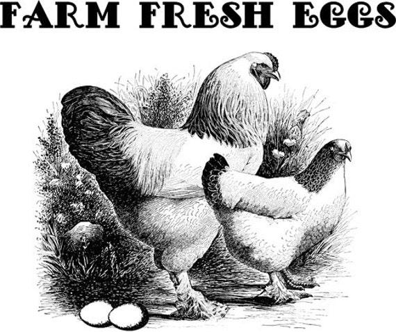 Farm Fresh Eggs chicken rooster printable wall art clipart png jpg clip art digital image download graphics animals birds digital stamp
