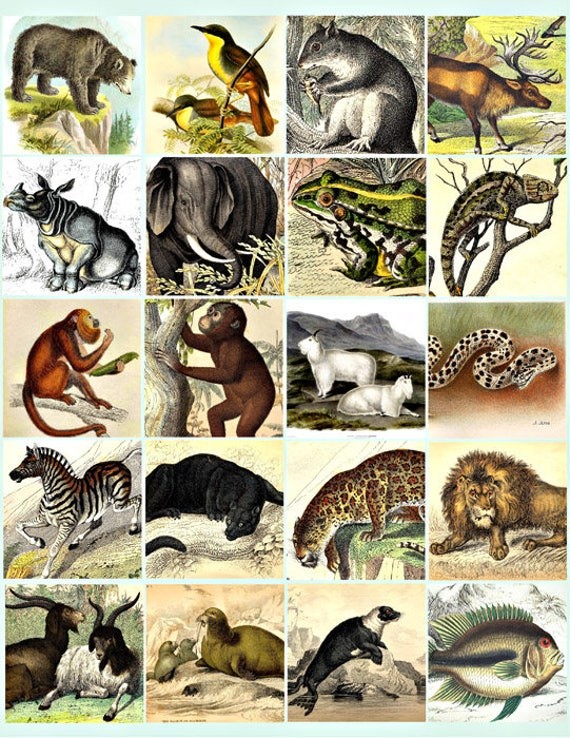 jungle forest animals clip art digital download collage sheet 2 INCH squares monkey lion bear image graphics scrapbooking craft printables