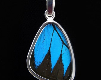 Small Blue and Black Papilio Ulysses Swallowtail Butterfly Wing Silver Pendant