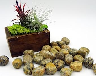 Tumbled Stones By the Ounce - LEOPARD SKIN JASPER - (Aj)