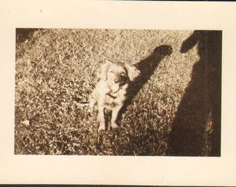 Puppy Love Vintage Photo of a Cute Dog M10903