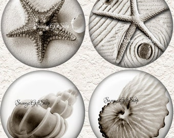 "Seashell Coaster Set of  4 - 3.5"" in Size  Buy 3 Sets Get 1 Full Set Free   061C"