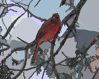 Cardinal in Snowy Shadows