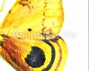 Yellow Moth Wing Watercolor Art Print Painting Butterfly 9x12