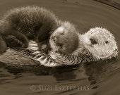 BABY SEA OTTER and Mom Ph...