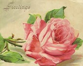 Hearty Greetings Embossed Antique Postcard Luscious Pink Rose Bloom – Stunning Floral Postcard Suitable For Framing