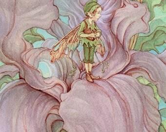 Iris 8.5x11 Print Illustration