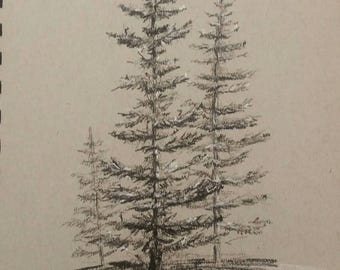 "Original Charcoal Pine Tree Drawing 5.5""x8.5"" / nature trees drawing"