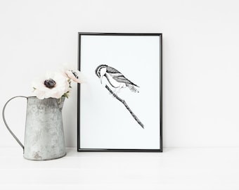 "Pied Triller Bird Print | 8"" x 10"" Pen-and-Ink Illustration 