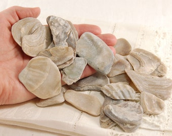 22 fossil oyster shell pieces (no.67)