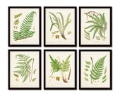 British Ferns Print Set No. 25, Botanical Prints, Giclee, Canvas Art Prints Antique Botanical, Poster,Large Art Prints, Fern Print Botanical