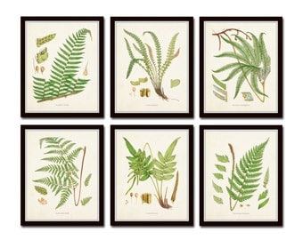 British Ferns Print Set No. 25, Botanical Prints, Giclee, Art Prints Antique Botanical,Poster, Large Art Prints, Fern Prints, Botanical Art