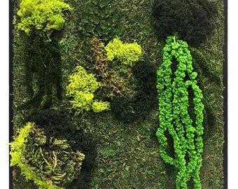 Moss Wall Petite- preserved moss, moss, wall decor, home decor, office decor, zero maintenance, gift, unique gift
