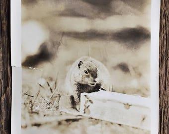 Original Vintage Photograph The Ground Squirrel 1932