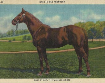 Man o'War at Stud - Vintage 1930s Greatest Race Horse Ever Tinted Linen Postcard
