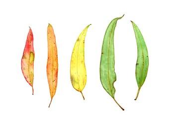 Gum Leaves Art Print, Wall Decor, Australian Gift, Botanical Artwork, 10 x 8, 7 x 5, Australiana Painting, Native Plant, Gumleaf Watercolour