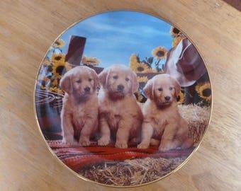 Golden Retriever Puppy Dog plate by Rpyal Doulton 1995 Don Scarlett