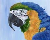 SALE Macaw Parrot  Bird Art Wildlife  SFA Bird Portrait  - Original hand painted acrylic bird painting by Australian Artist Janet M Graham