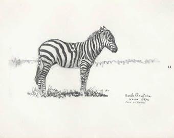 Zebra,Black and white birds Etchings signed by artist vintage item,decorative art, wall art, original print,hotel art,
