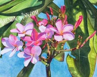 Pink Plumeria - Watercolor Archival Print                by Brenda Ann