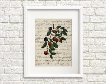 Rustic Plums VI - Rustic Italian Garden Print, French Country Farmhouse Cottage Fruits, Gray, Vintage Inspired Folk Art Print