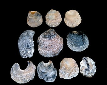 Natural Oyster Shells Jewelry Supply Necklace Pendants  #6