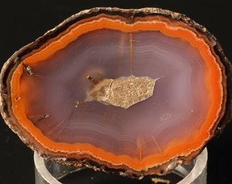 Beautiful Polished Coyamito Agate Half Nodule
