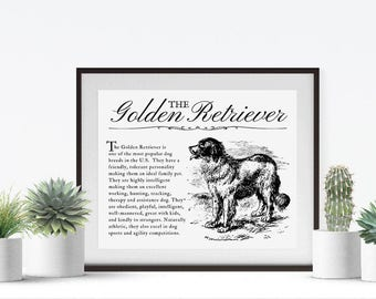 Golden Retriever Vintage Inspired Wall Art Home Decor Print on Canvas Paper With Retro Artwork and Dog Breed Definition Farmhouse Style Gift