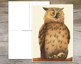 Postcard Owl limited edition