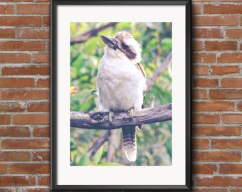 Kookaburra Photography Print Printable Art Downloadable Print