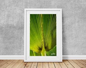nature photography leaf tropical green leaves jungle close-up photo print wall art home decor vibrant wild jungle samoa pacific striped