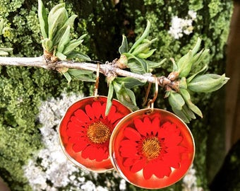 Gold brass terrarium real red daisies preserved in resin earrings, bohemian , love, nature, mother, gift, wedding, garden , earth