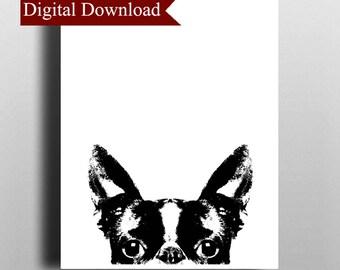 Boston Terrier DIGITAL Print Download