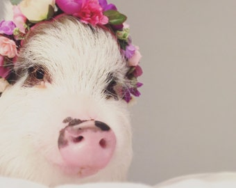 Pig Flower Collars, Pig Flower Crowns, Animal Flower Crowns, Pet Flower Crowns