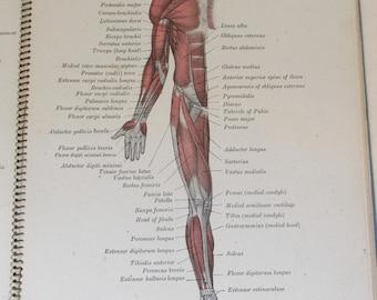 Vintage 1950s Anatomy Book ~ Faber's Anatomical Atlas - Ringbound Edition