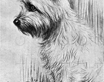 LOVELY CAIRN Terrier DOG Portrait. Vintage Illustration Cairn Terrier. Cairn Terrier Dog Print. Digital Dog Download.