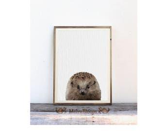 Baby Hedgehog Peekaboo Print, Cute Hedgehog Large Poster, Nursery Wall Art, Baby Animal Woodlands Wall Print, Kids Decor