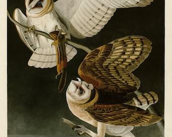 Birds of America by John James Audubon, Barn Owl, c. 1827,  Museum quality, Giclee Art Print
