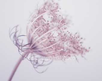 Flower Photography, Queen Anne's Lace, Wall Art, Pink, Still Life, Gift Idea, Home Decor, Girls Room